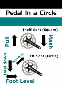 Pedal in a circle